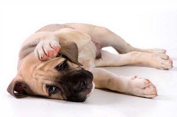 сумна собака