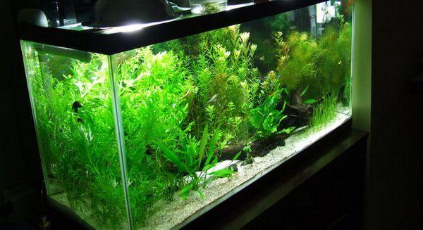 Освітлення в акваріумі
