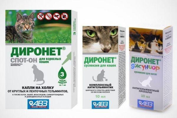 Діронет для кішок і котів