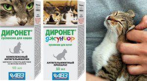 Dironet pre mačky