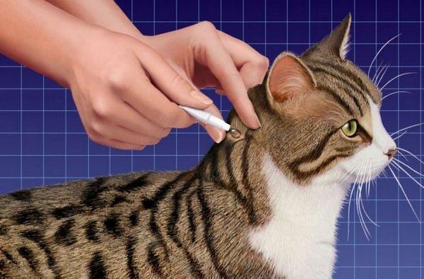 Застосування препарату від бліх