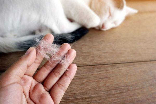 Ознаки алергії у кішки