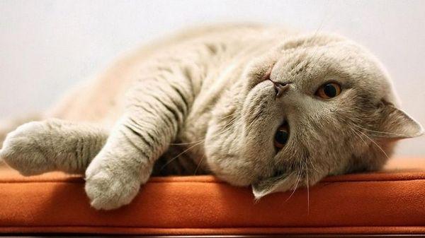 Кіт спить