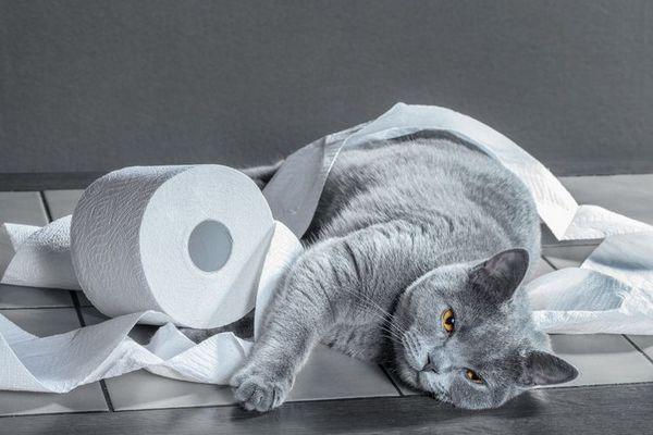 Кот і туалетний папір