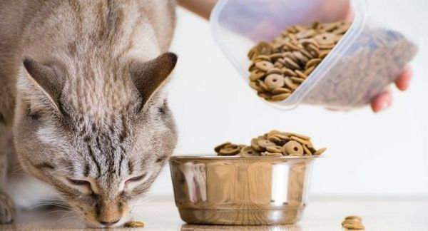 Кішка їсть сухий корм