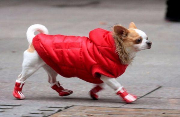 Собака у взутті