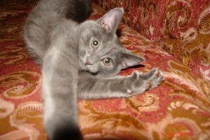 Як визначити вік кішки