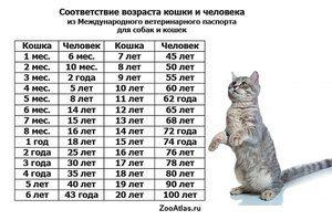 До якого віку зростає кішка