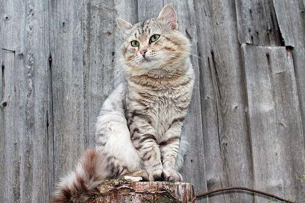 Кіт сидить на пеньку