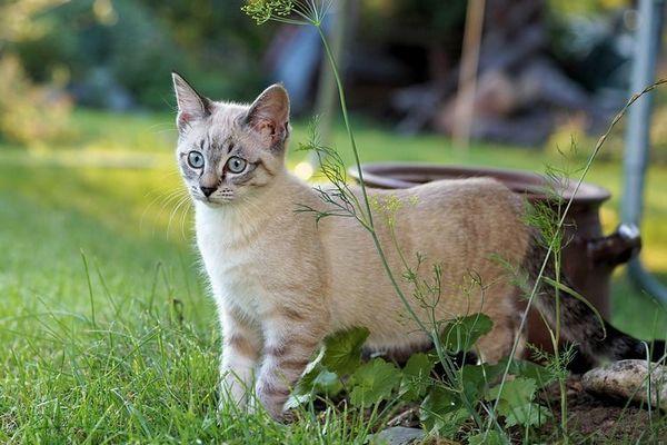 Кот в городі