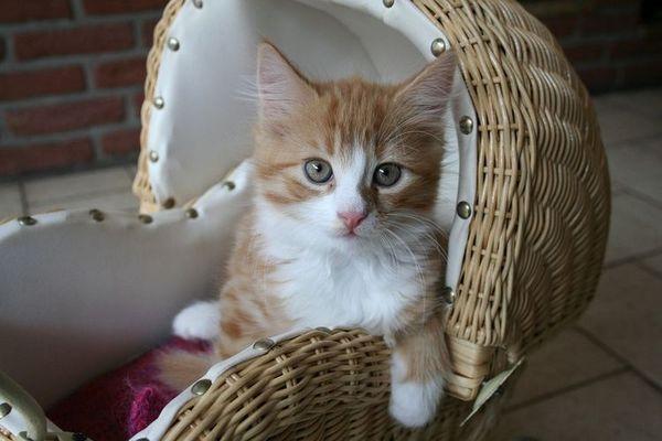 Кошеня сидить в колясці