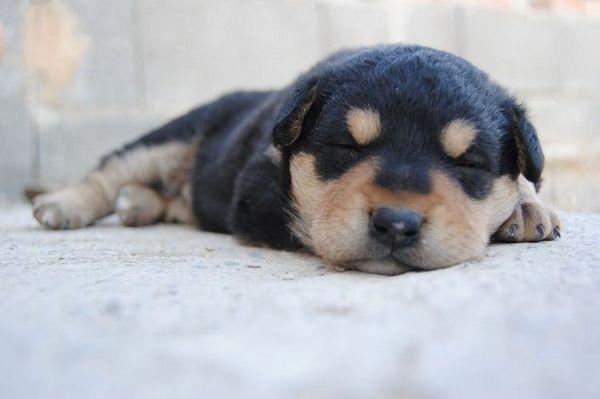 Щеня спить
