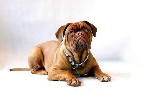 Собака дивиться на господаря