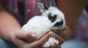 Термін життя кролика в домашніх умовах