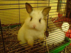 Декоративні кролики в клітці - як облаштувати