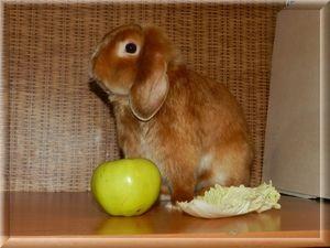 Годування кролика - підбираємо раціон