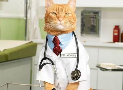 Domáca mačka je rodinný lekár!
