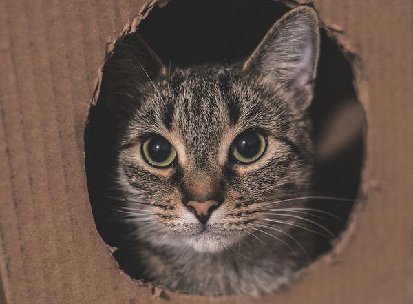 Кот в картонній коробці