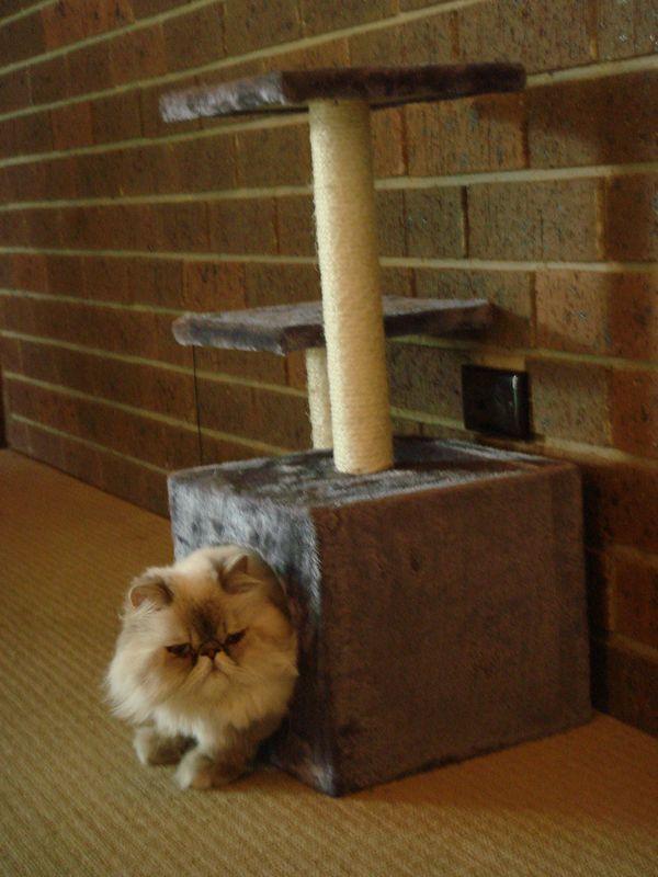 Кот в будиночку з Драпко