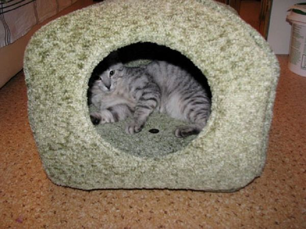 Будиночок для кішки своїми руками