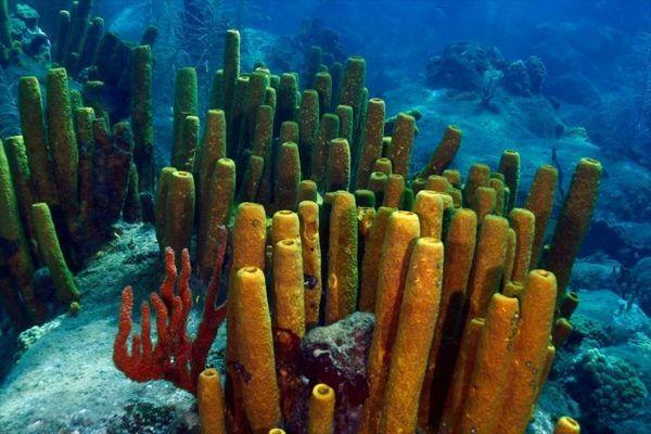 Morská huba