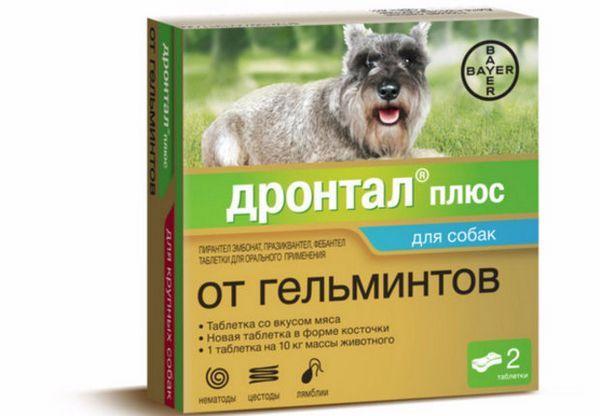 «Дронтал» від гельмінтів: як давати собаці