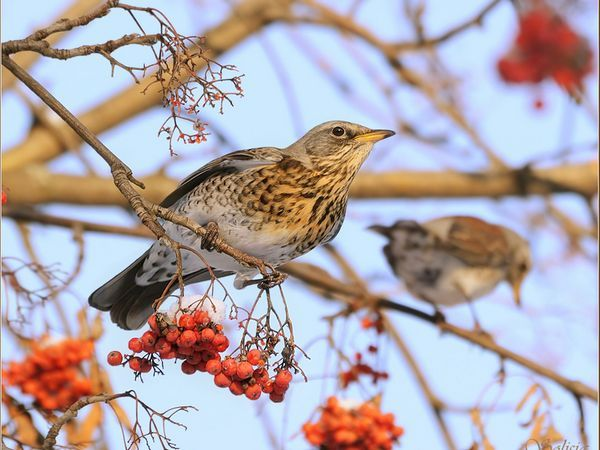 Спосіб життя птиці