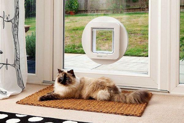 Дверцята для кішок і котів