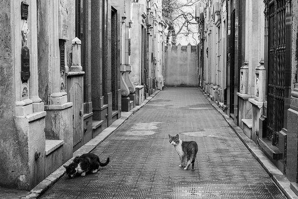 оголошення про зникнення кішок