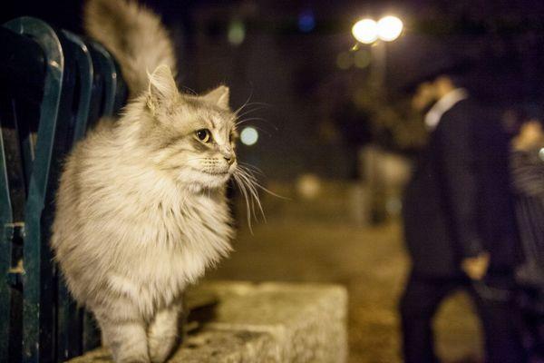 вулиця, кішки, що робити якщо пропала кішка, допомога, пошуки кішки, кішка пішла