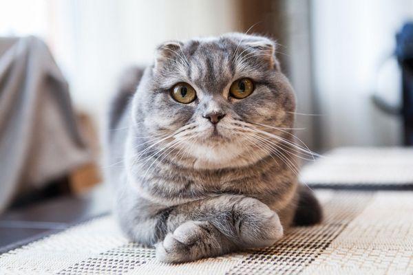 Mačiatko alebo nie - ako to určiť?