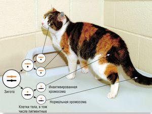 38 хромосом у кішок
