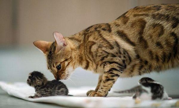 Кішка і кошенята