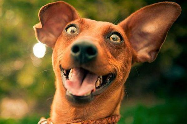 «Фітекс» для собак