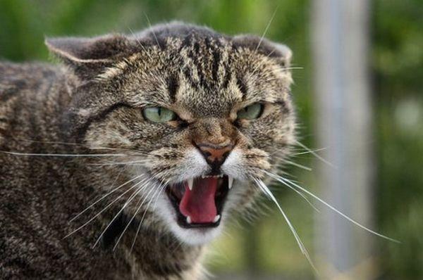 «Фітекс» для кішок