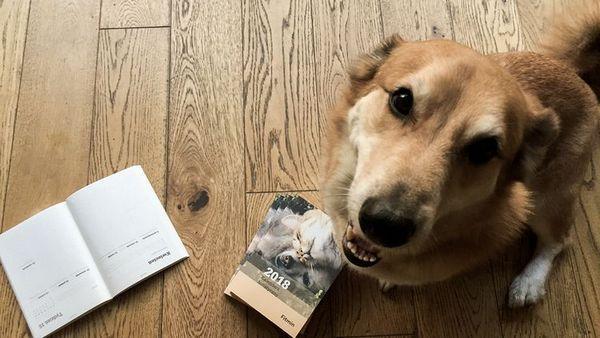 Корм для собак Фітмін