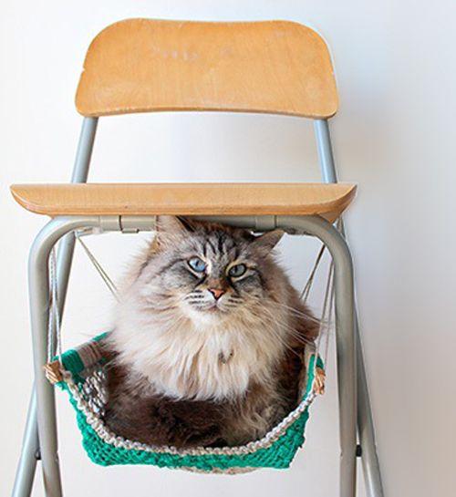 Кот в гамаку