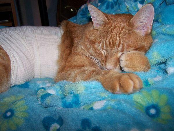 лікування гастриту у кішок
