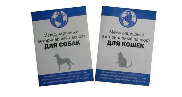 Къде и как да си направите ветеринарен паспорт за кучета и котки