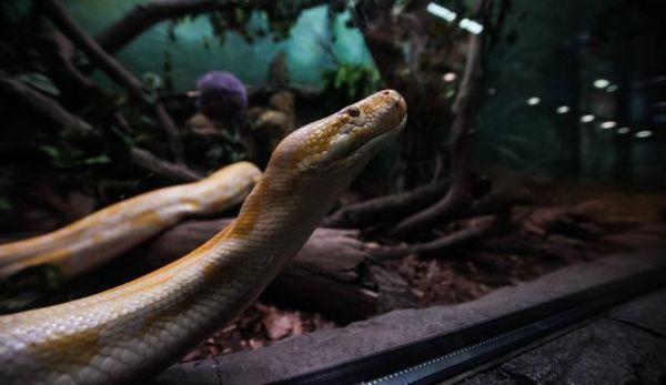 Змія в зоопарку