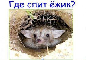 Kde môže ježko zimovať: zimný spánok zvierat, zimné prvky pre ježka