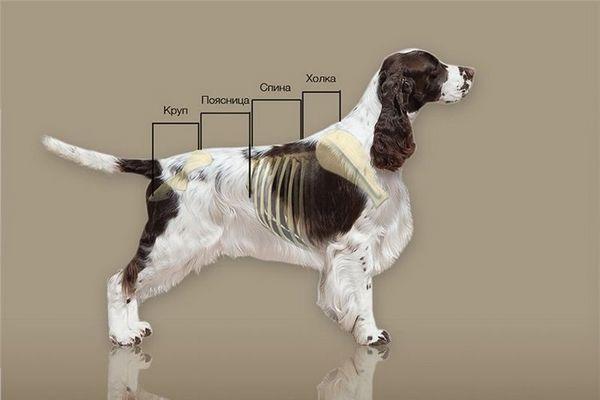 параметри собаки