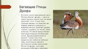 Як виглядає птах дрохва