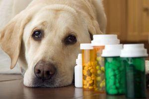 Лікування печінки собакам