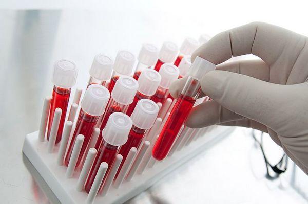 Аналіз крові на герпес у собаки