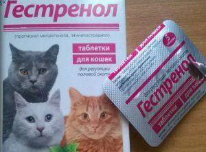 `Gestrenol`: tablety a kvapky pre mačky a mačky