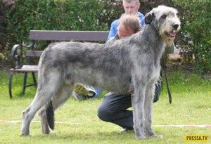 Будова тіла і вага собаки