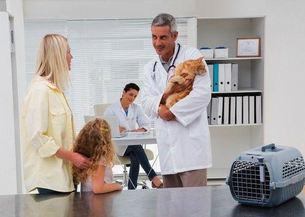 Hyperplázia u mačiek: príčiny, diagnostika a liečba