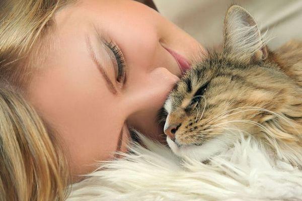 Hypoalergénne plemená mačiek