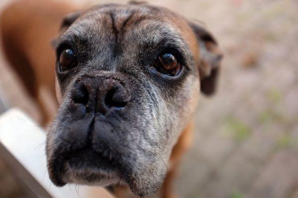 Собака з сумними очима